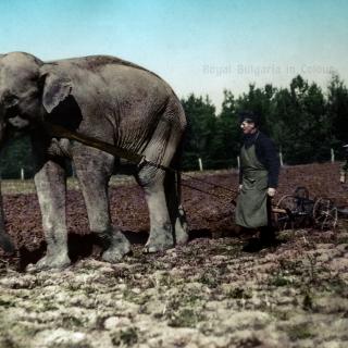 Оран със слона Нел